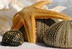 Морска звезда
